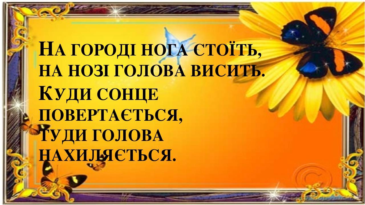 НА ГОРОДІ НОГА СТОЇТЬ, НА НОЗІ ГОЛОВА ВИСИТЬ. КУДИ СОНЦЕ ПОВЕРТАЄТЬСЯ, ТУДИ ГОЛОВА НАХИЛЯЄТЬСЯ.