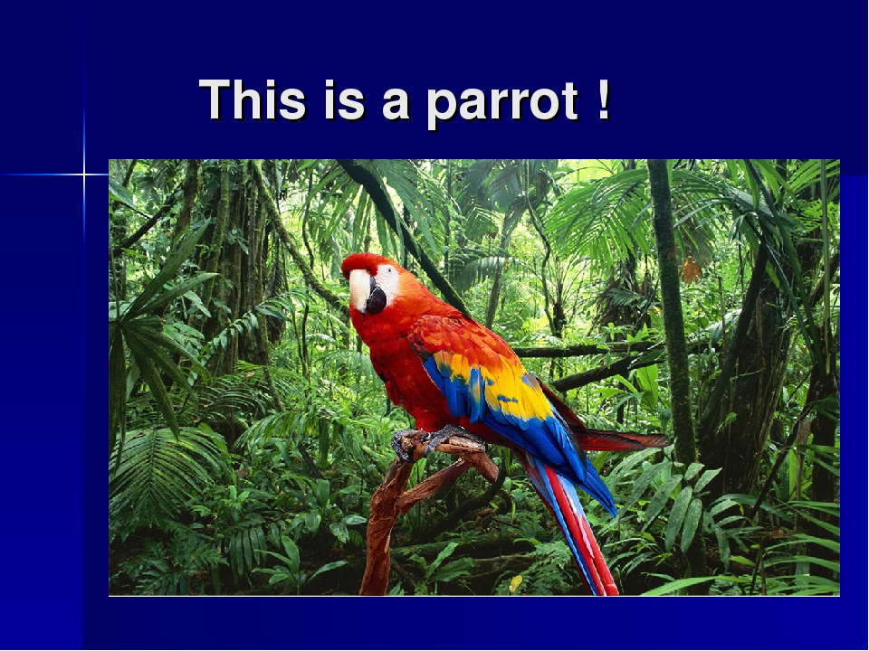 This is a parrot !