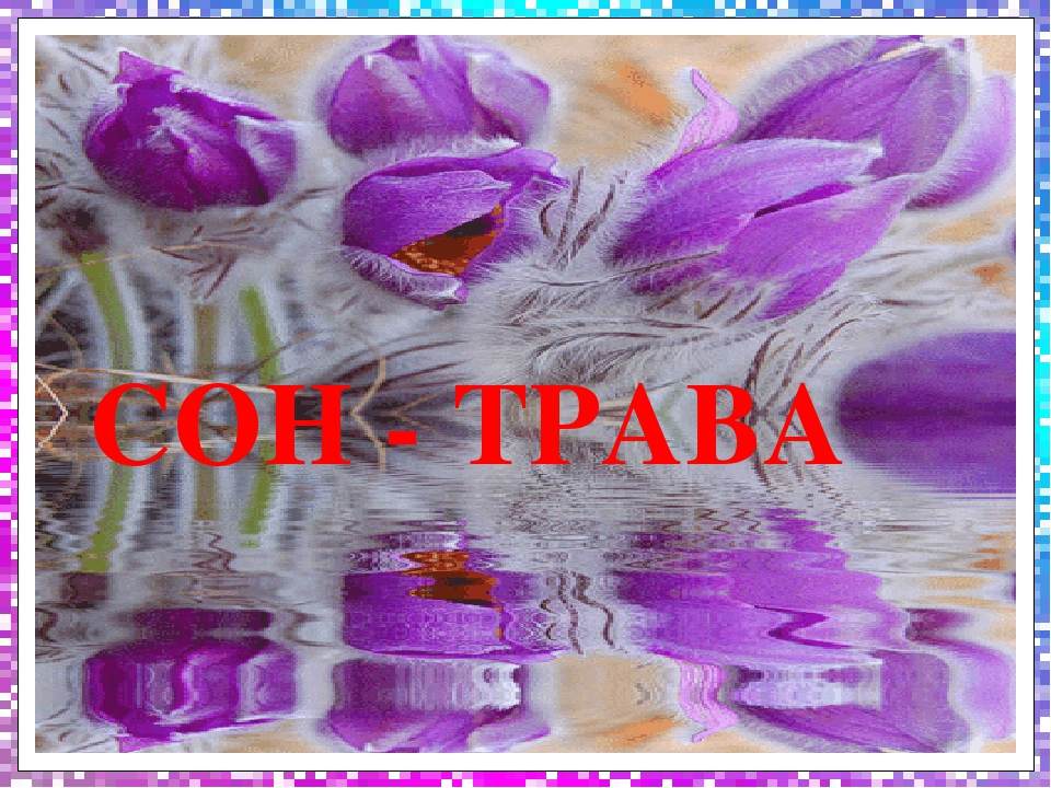 СОН - ТРАВА