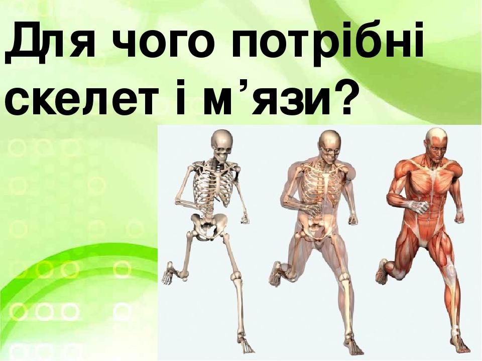 Для чого потрібні скелет і м'язи?