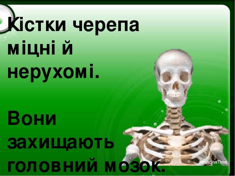 Кістки черепа міцні й нерухомі. Вони захищають головний мозок.