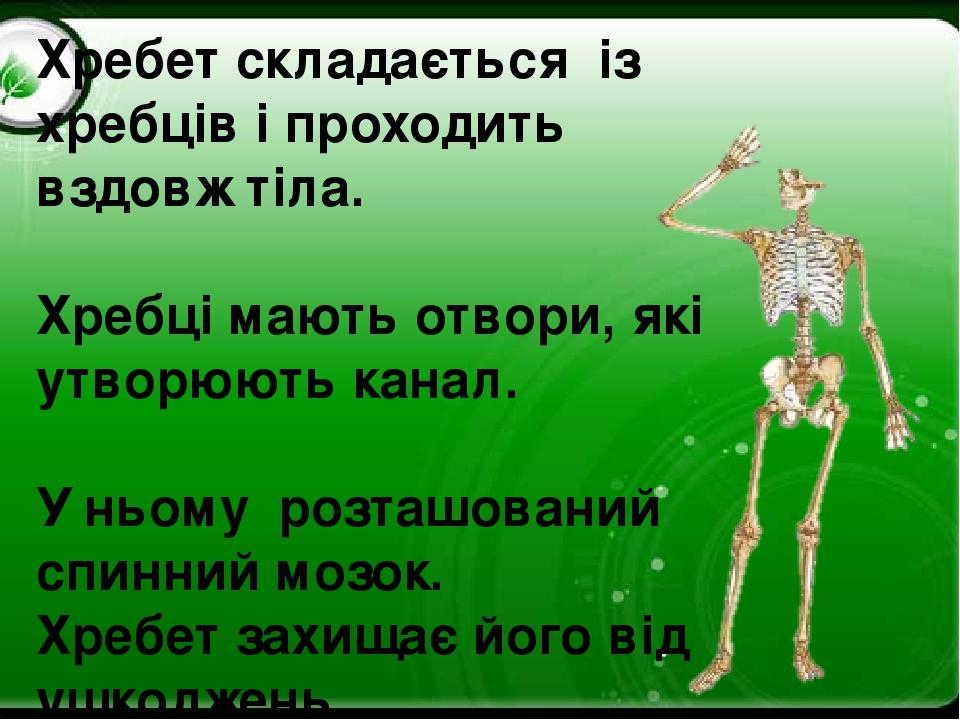 Хребет складається із хребців і проходить вздовж тіла. Хребці мають отвори, які утворюють канал. У ньому розташований спинний мозок. Хребет захищає...