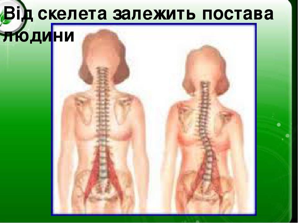 Від скелета залежить постава людини
