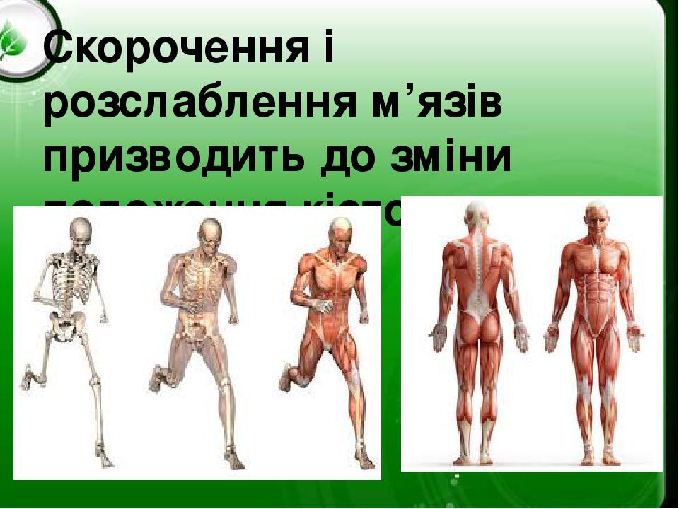 Скорочення і розслаблення м'язів призводить до зміни положення кісток.