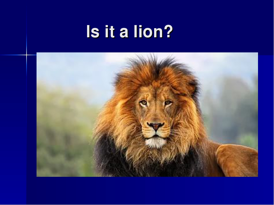 Is it a lion?