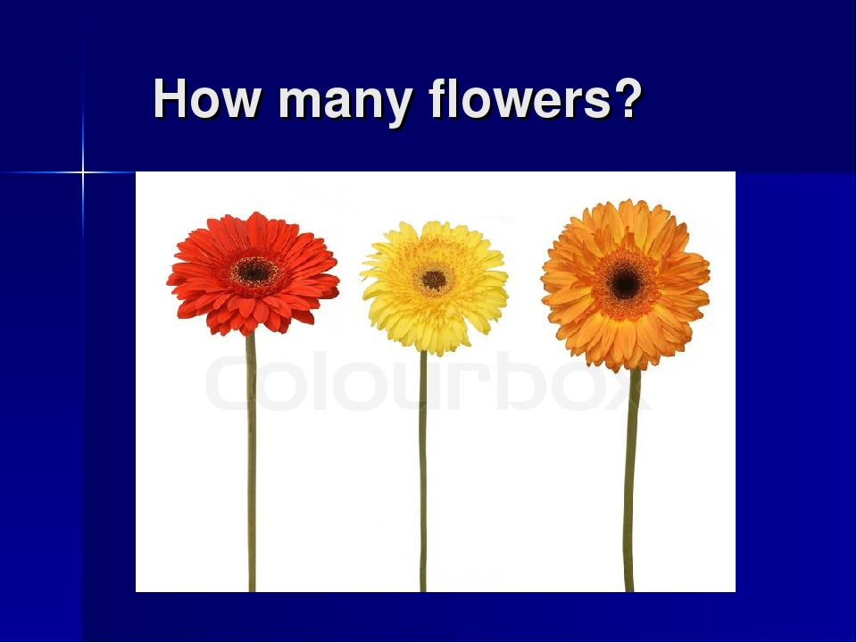 How many flowers?