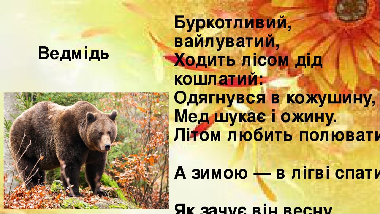 Буркотливий, вайлуватий, Ходить лісом дід кошлатий: Одягнувся в кожушину, Мед шукає і ожину. Літом любить полювати, А зимою — в лігві спати. Як зач...
