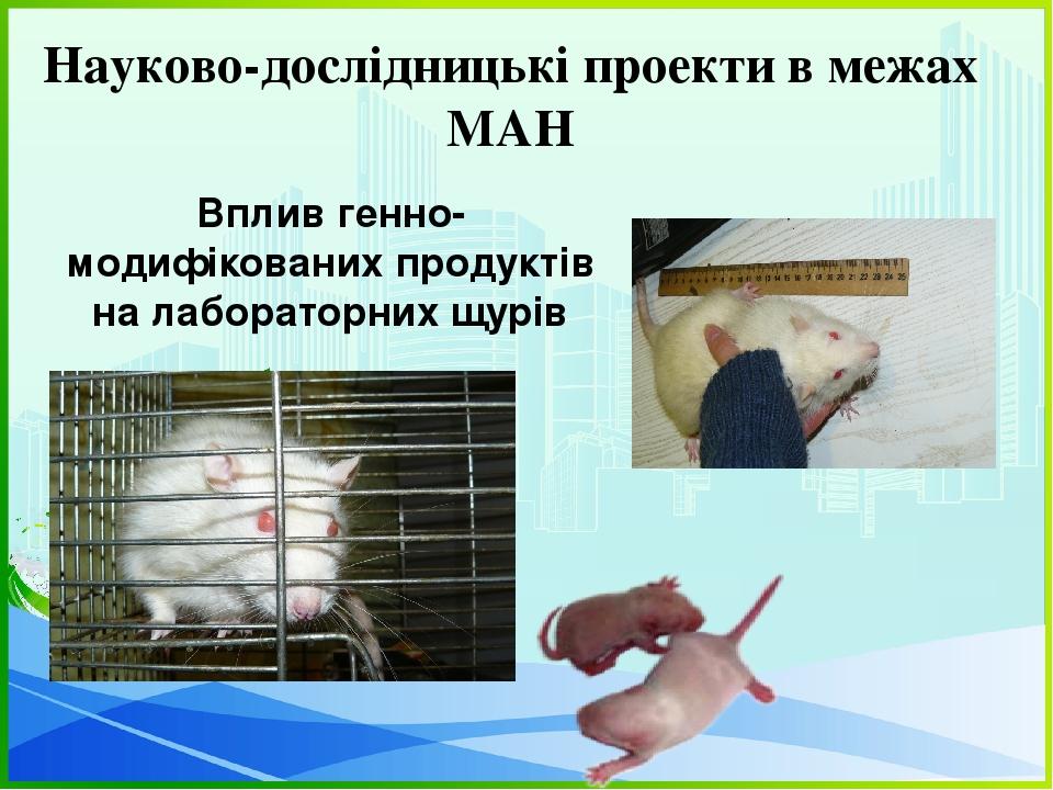Науково-дослідницькі проекти в межах МАН Вплив генно-модифікованих продуктів на лабораторних щурів
