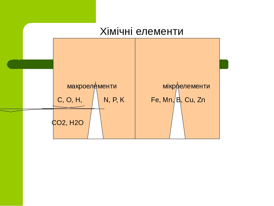 Хімічні елементи макроелементи мікроелементи С, О, Н, N, P, K Fe, Mn, B, Cu, Zn СО2, Н2О