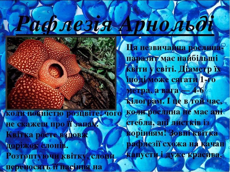 Рафлезія Арнольді Ця незвичайна рослина-паразит має найбільші квіти у світі. Діаметр їх іноді може сягати 1-го метра, а вага — 4-6 кілограм. І це в...