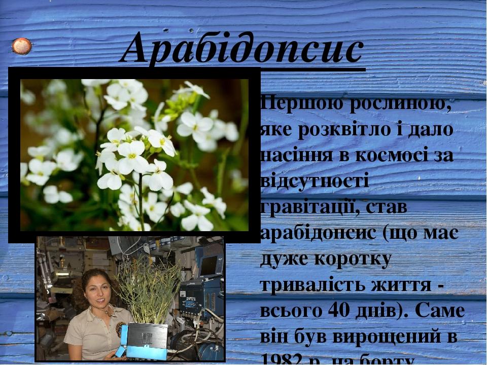Арабідопсис Першою рослиною, яке розквітло і дало насіння в космосі за відсутності гравітації, став арабідопсис (що має дуже коротку тривалість жит...