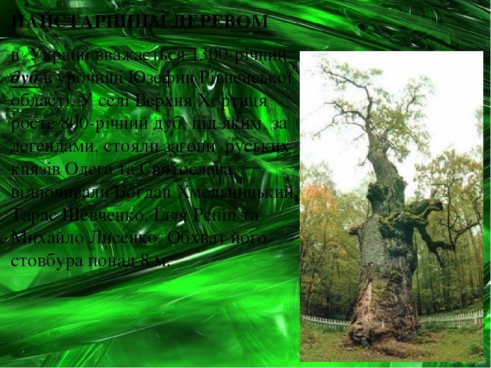 НАЙСТАРІШИМ ДЕРЕВОМ в Україні вважається 1300-річний дуб в урочищі Юзефин Рівненської області. У селі Верхня Хортиця росте 800-річний дуб, під яким...