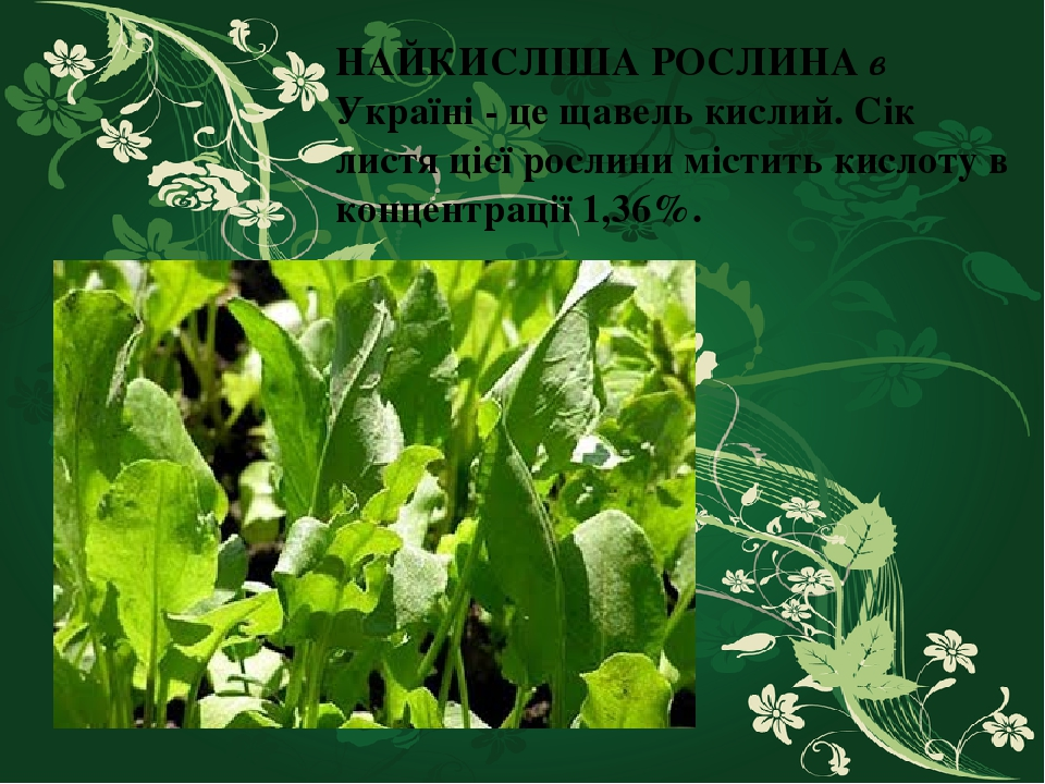 НАЙКИСЛІША РОСЛИНА в Україні - це щавель кислий. Сік листя цієї рослини містить кислоту в концентрації 1,36%.