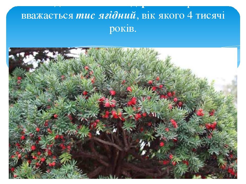 Найдовговічнішим деревом України вважається тис ягідний, вік якого 4 тисячі років.