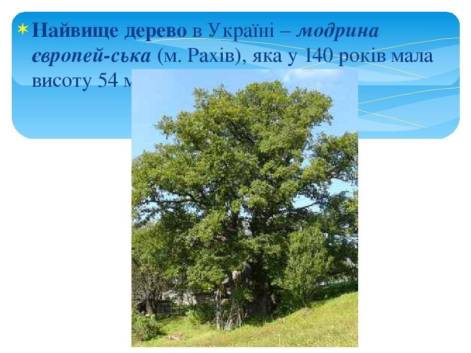 Найвище дерево в Україні – модрина європей-ська (м. Рахів), яка у 140 років мала висоту 54 м.