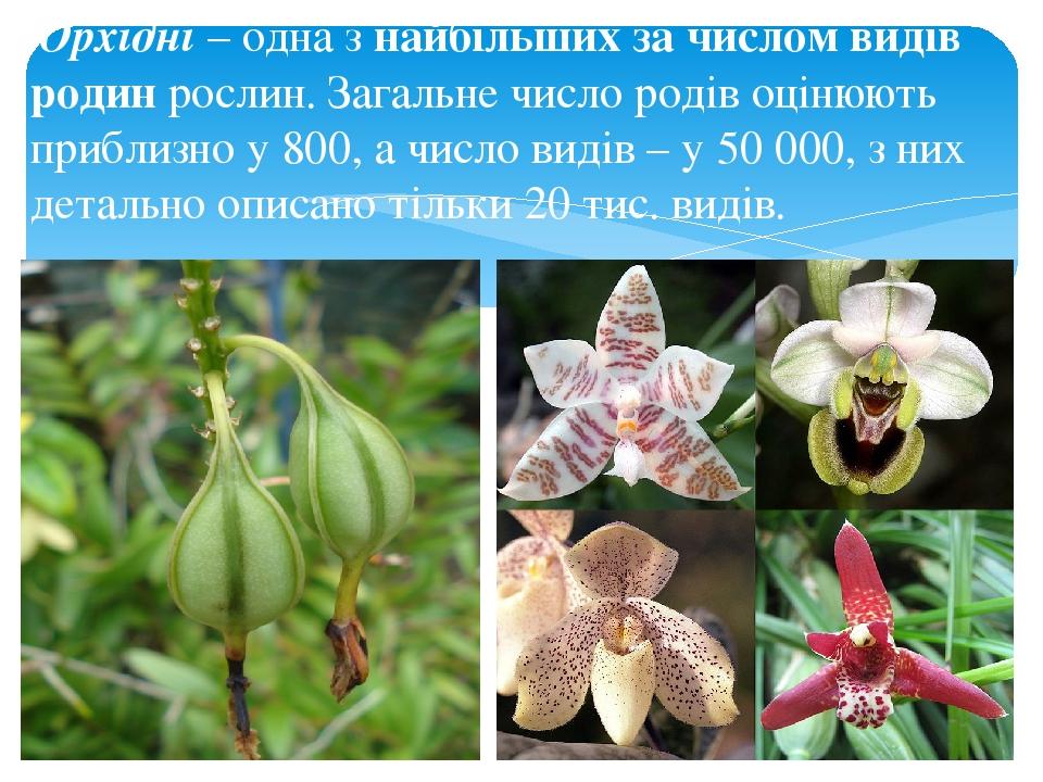 Орхідні – одна з найбільших за числом видів родин рослин. Загальне число родів оцінюють приблизно у 800, а число видів – у 50 000, з них детально о...