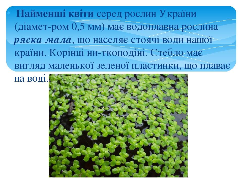 Найменші квіти серед рослин України (діамет-ром 0,5 мм) має водоплавна рослина ряска мала, що населяє стоячі води нашої країни. Корінці ни-ткоподін...