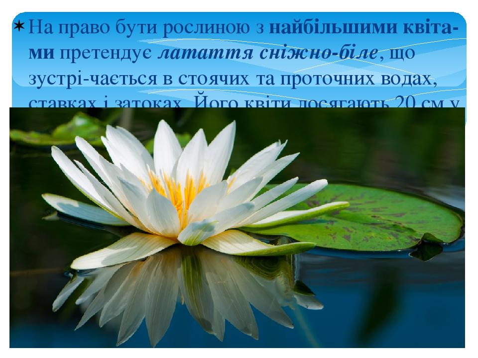 На право бути рослиною з найбільшими квіта-ми претендує латаття сніжно-біле, що зустрі-чається в стоячих та проточних водах, ставках і затоках. Йог...