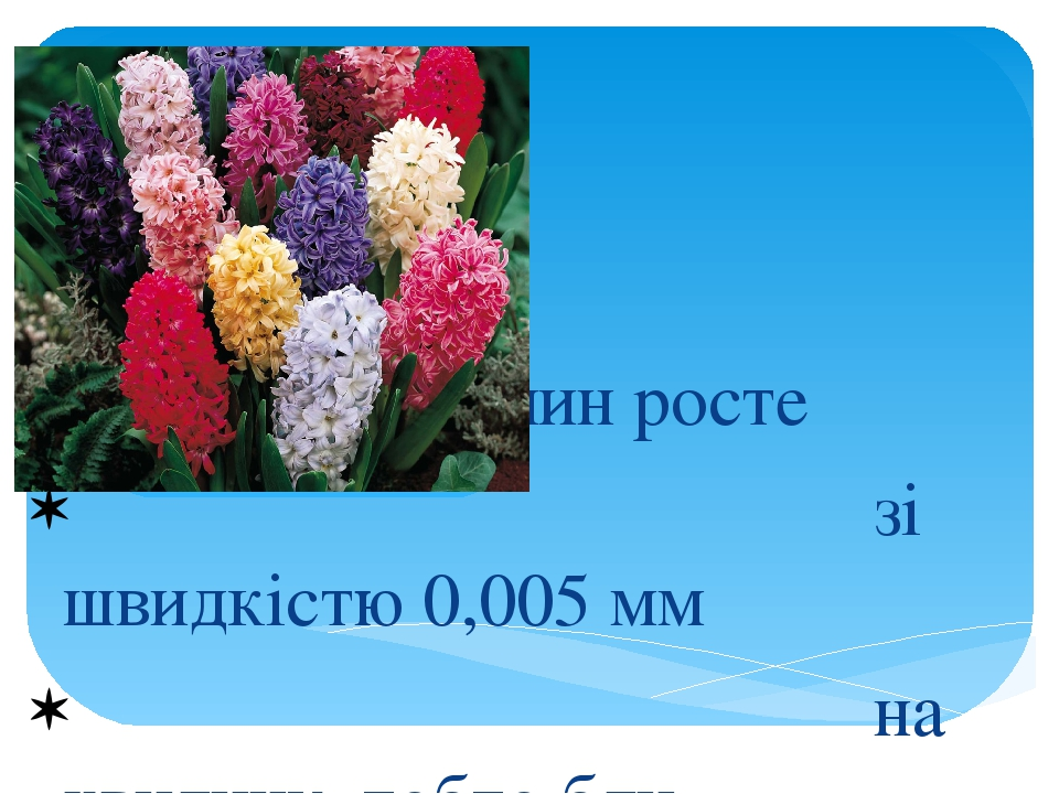 Більшість рослин росте зі швидкістю 0,005 мм на хвилину, тобто бли- зько 0,7 см на добу. Про- те швидкість росту квітконосної стрілки гіацин- та не...