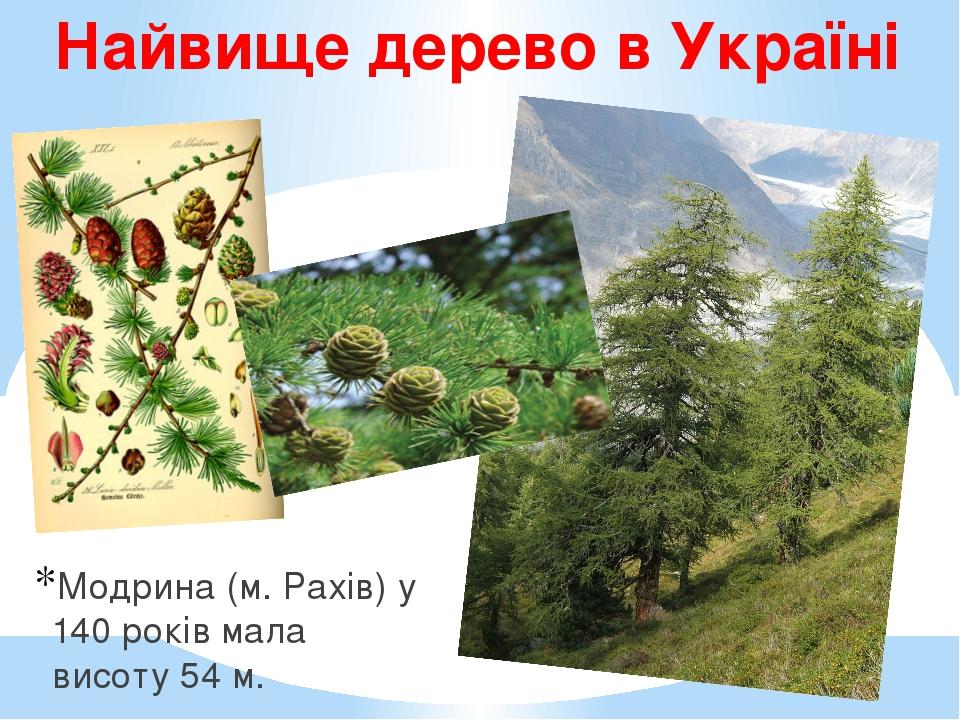 Найвище дерево в Україні Модрина (м. Рахів) у 140 років мала висоту 54 м.