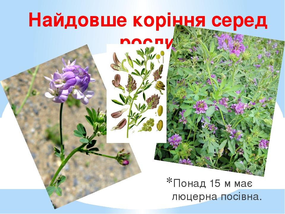 Найдовше коріння серед рослин України Понад 15 м має люцерна посівна.