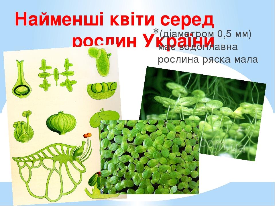 Найменші квіти серед рослин України (діаметром 0,5 мм) має водоплавна рослина ряска мала