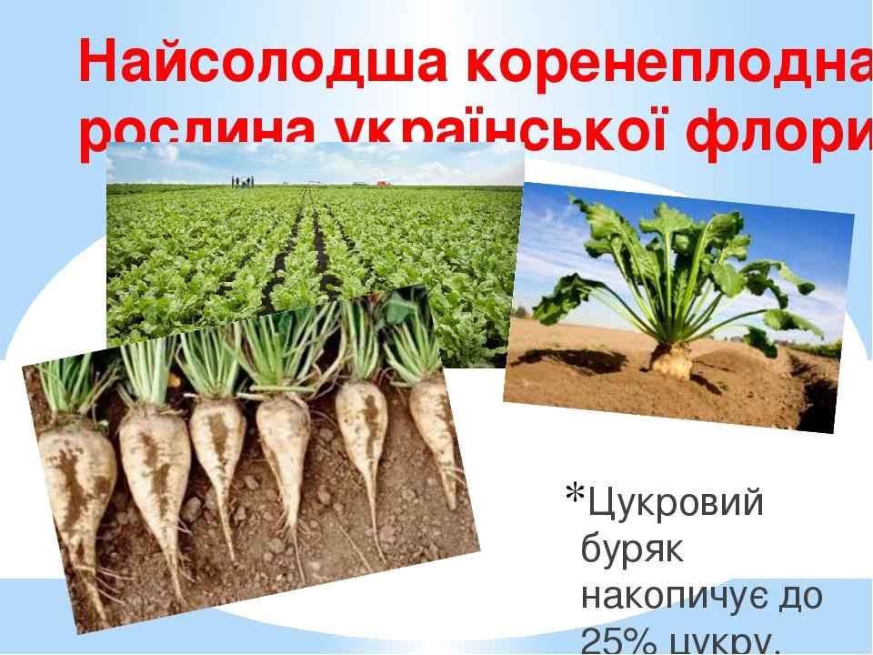Найсолодша коренеплодна рослина української флори Цукровий буряк накопичує до 25% цукру.