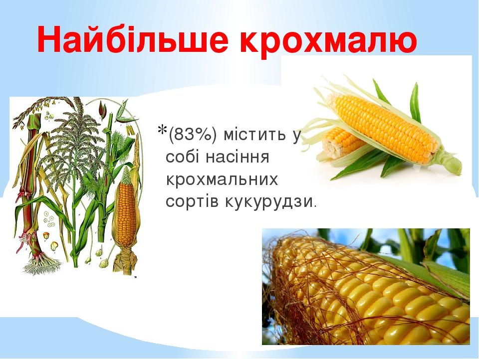 Найбільше крохмалю (83%) містить у собі насіння крохмальних сортів кукурудзи.