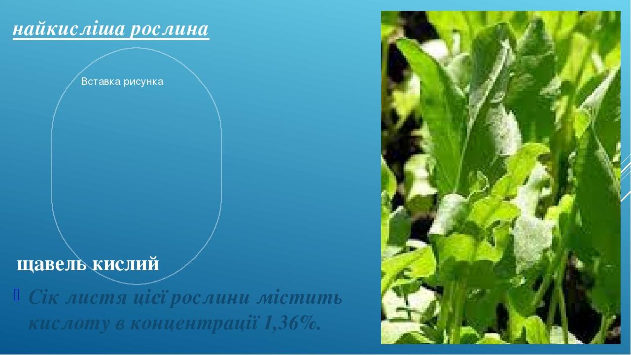 найкисліша рослина Сік листя цієї рослини містить кислоту в концентрації 1,36%. щавель кислий
