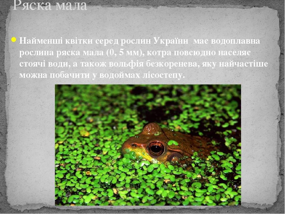 Найменші квітки серед рослин України має водоплавна рослина ряска мала (0, 5 мм), котра повсюдно населяє стоячі води, а також вольфія безкоренева, ...