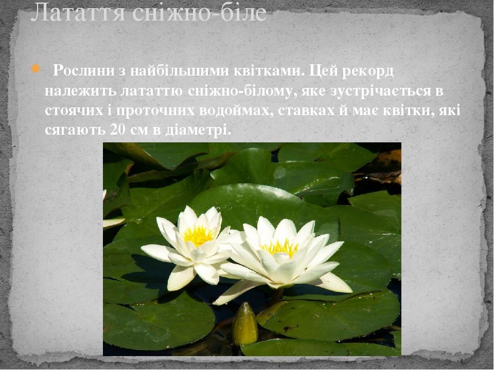 Рослини з найбільшими квітками. Цей рекорд належить лататтю сніжно-білому, яке зустрічається в стоячих і проточних водоймах, ставках й має квітки...
