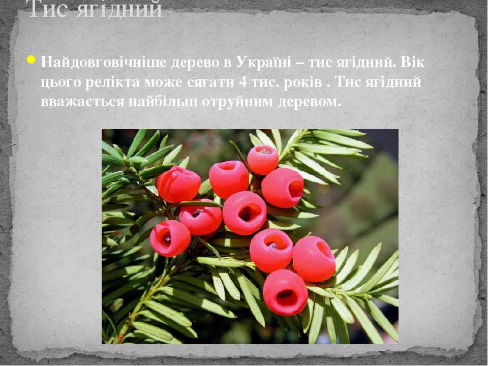 Найдовговічніше дерево в Україні – тис ягідний. Вік цього релікта може сягати 4 тис. років . Тис ягідний вважається найбільш отруйним деревом. Тис ...
