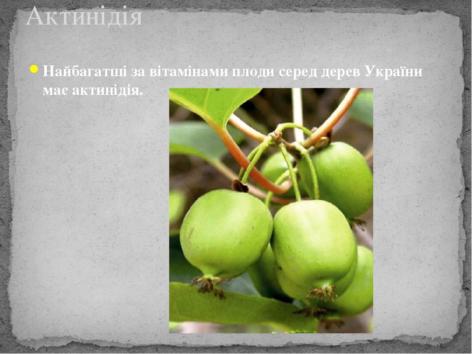 Найбагатші за вітамінами плоди серед дерев України має актинідія. Актинідія
