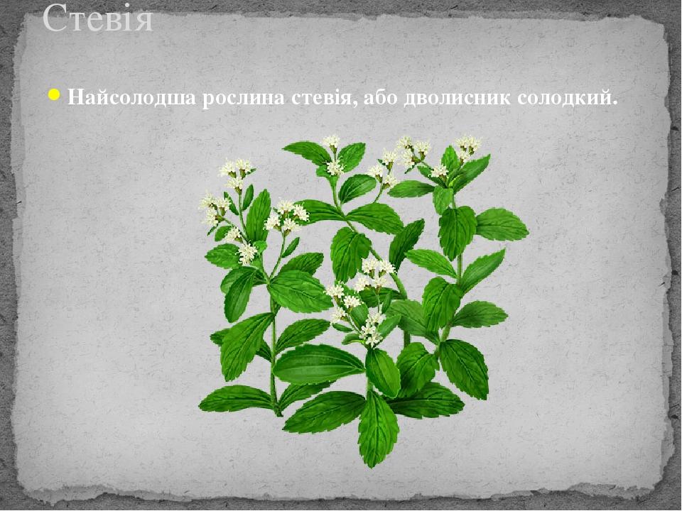 Найсолодша рослина стевія, або дволисник солодкий. Стевія