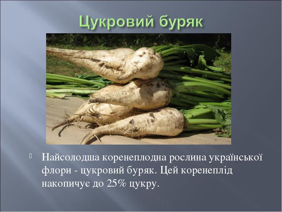 Найсолодша коренеплодна рослина української флори - цукровий буряк. Цей коренеплід накопичує до 25% цукру.