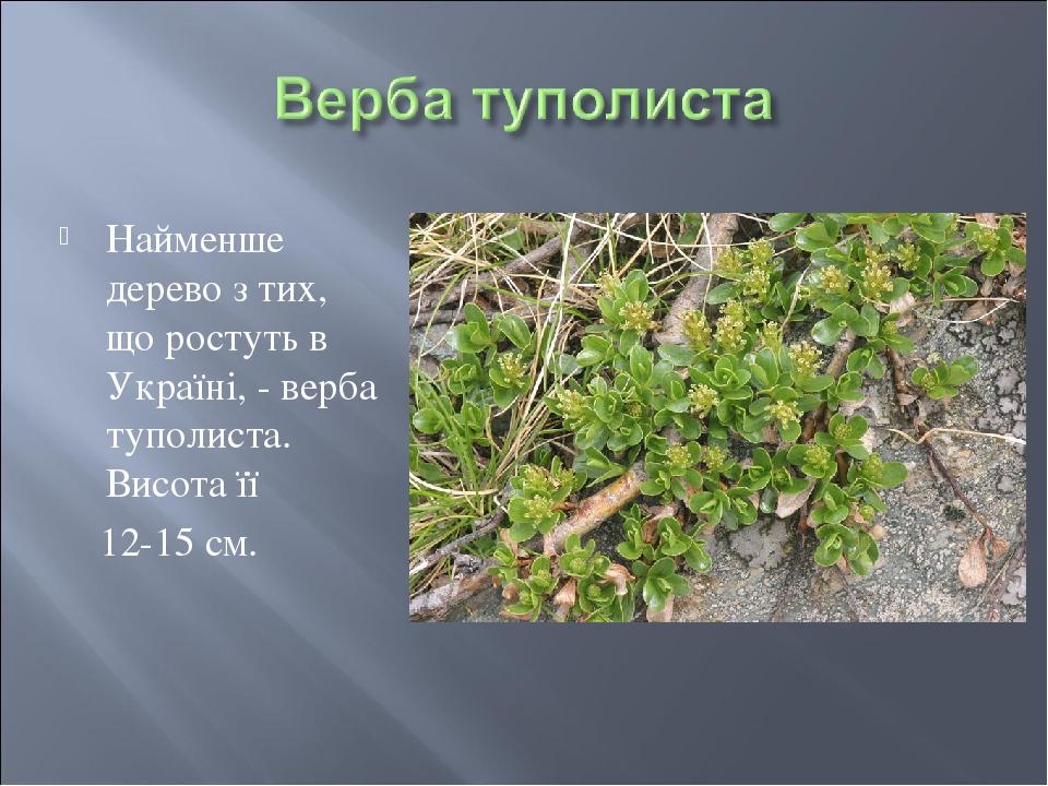 Найменше дерево з тих, що ростуть в Україні, - верба туполиста. Висота її 12-15 см.