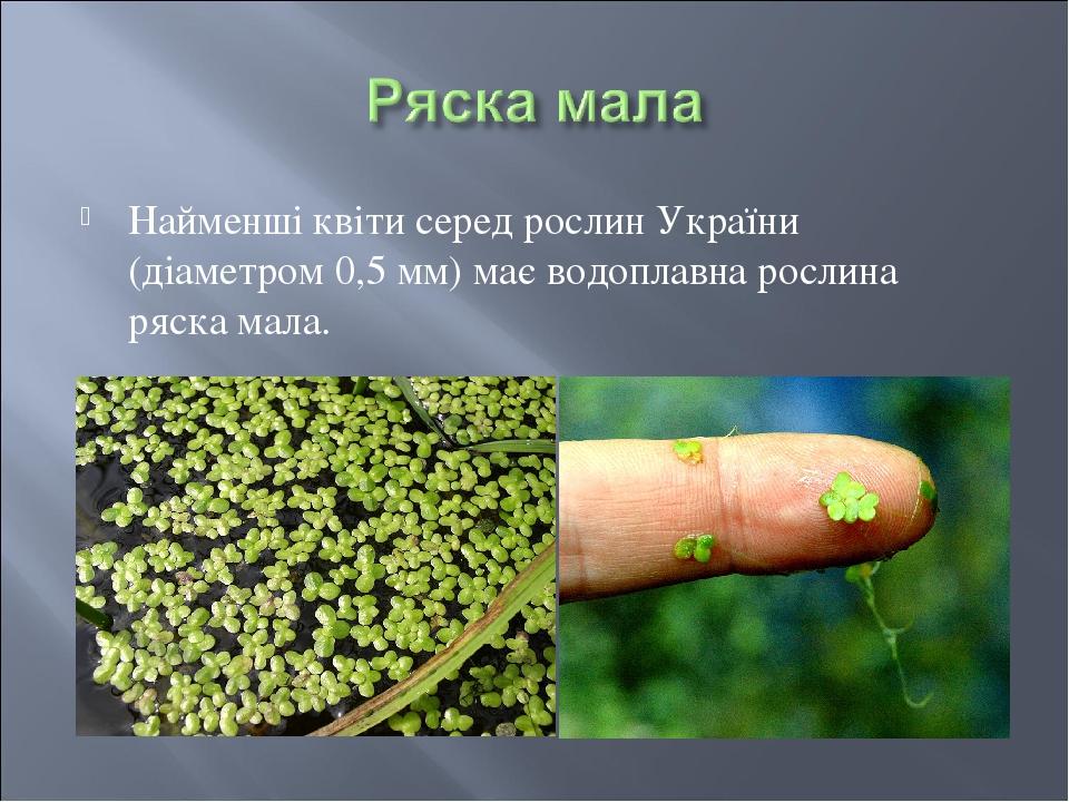 Найменші квіти серед рослин України (діаметром 0,5 мм) має водоплавна рослина ряска мала.