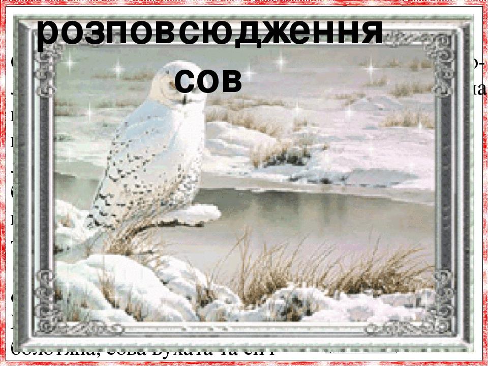 Сови розселені по всьому світу, від екватора до хо-лодних північних країн. Їх можна знайти скрізь: і на морському березі, і в горах, і в пустелі, і...