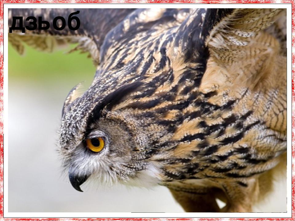 Дзьоб сови короткий, вигнутий, з розташованими біля основи ніздрями. дзьоб