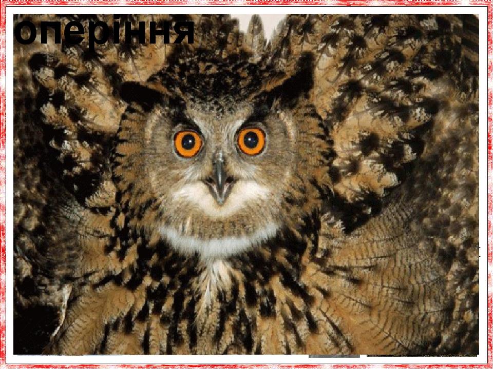 У сов пухке і м'яке оперення. У цих птахів біль-шу частину оперення можна порівняти тільки з пухом, який густо росте навіть на лапах, що дає їй пер...