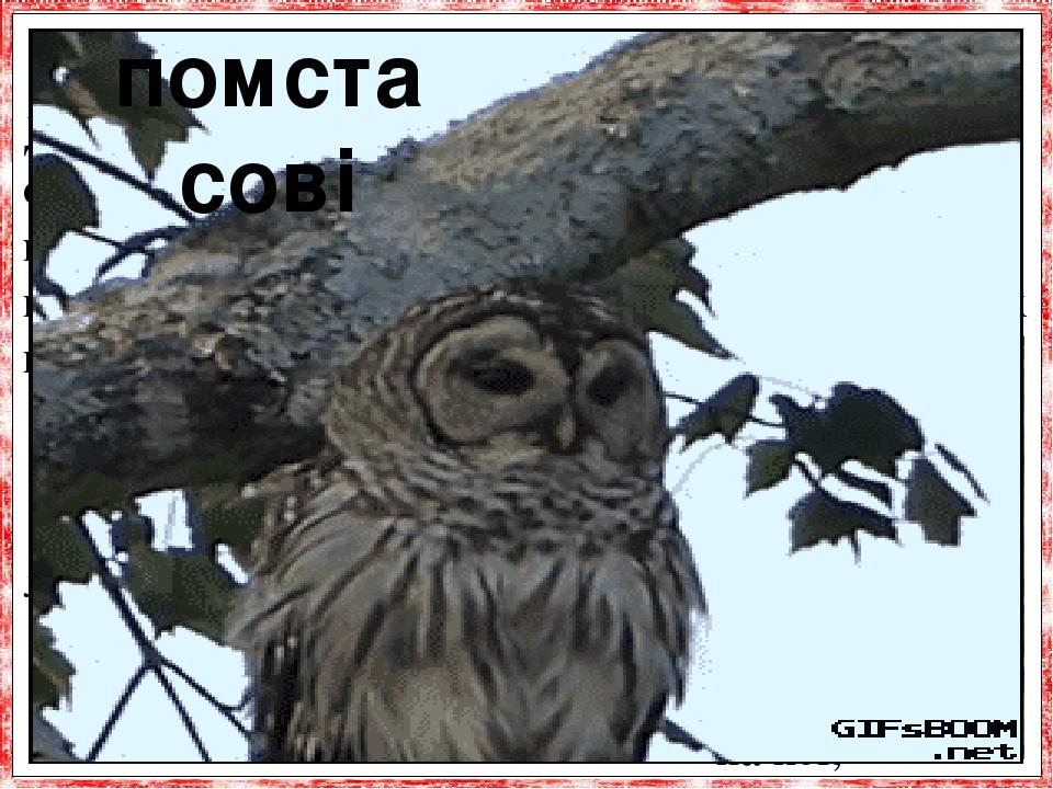 Денні птахи ненавидять сов і прагнуть помстити-ся цим хижакам за напади, які робляться ними вночі, під час сну. Весь ліс приходить в хвилюва-ння, я...