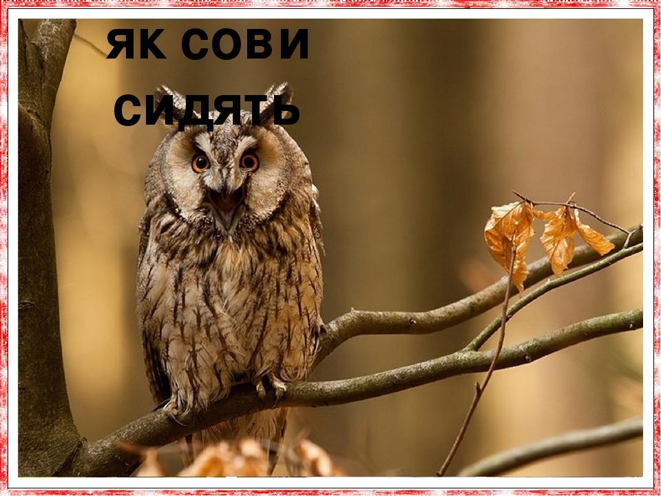 Коли сови сидять, вони добре відрізняються від інших птахів своєю манерою сидіння: наприклад, сова вухата сидить стовпчиком з витягнутими ве-ртикал...