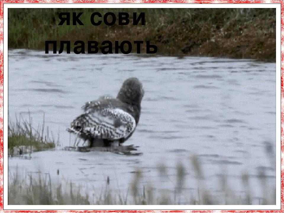 як сови плавають