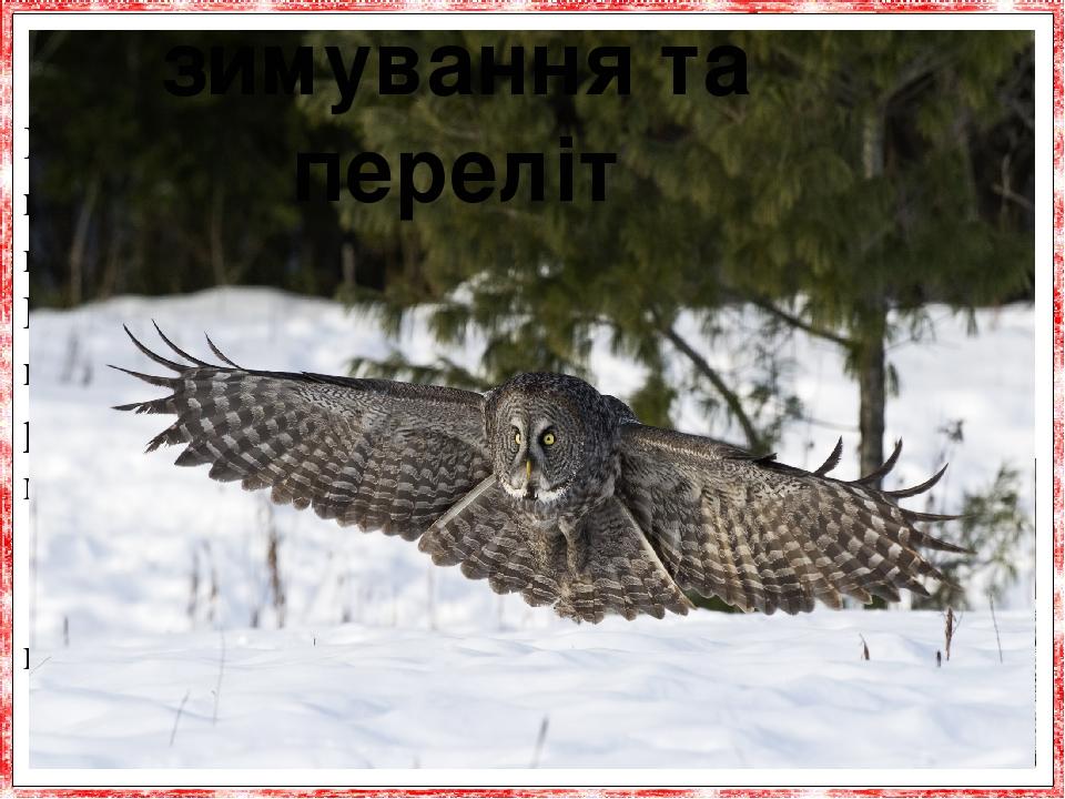Майже все сови - птаха осілі, тобто все життя жи-вуть в одному місці, однак бувають серед них і перелітні види. Деякі сипухи, що зустрічаються в Це...