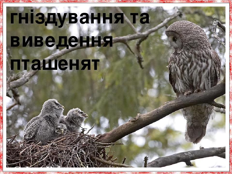 гніздування та виведення пташенят