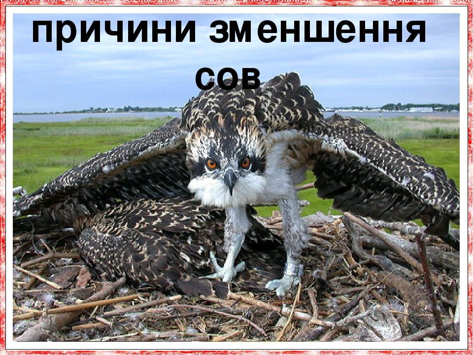 У порівнянні з іншими птахами, сови часто ги-нуть від отрутохімікатів, що використовуються в сільському господарстві. Це пояснюється тим, що сови з...