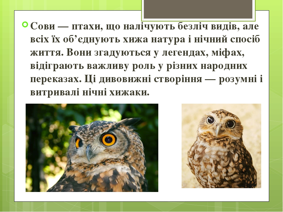 Сови — птахи, що налічують безліч видів, але всіх їх об'єднують хижа натура і нічний спосіб життя. Вони згадуються у легендах, міфах, відіграють ва...