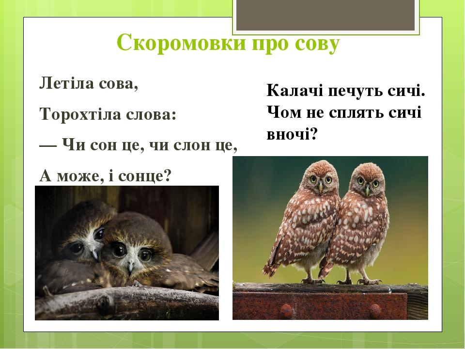 Скоромовки про сову Летіла сова, Торохтіла слова: — Чи сон це, чи слон це, А може, і сонце? Калачі печуть сичі. Чом не сплять сичі вночі?