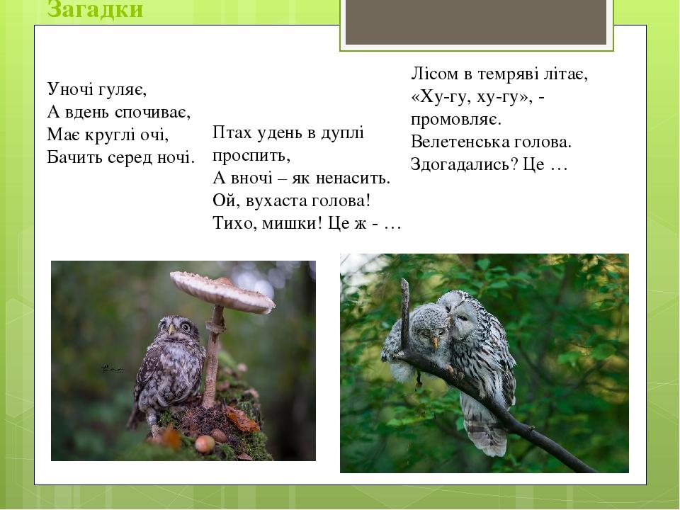 Загадки Уночі гуляє, А вдень спочиває, Має круглі очі, Бачить серед ночі. Птах удень в дуплі проспить, А вночі – як ненасить. Ой, вухаста голова! Т...