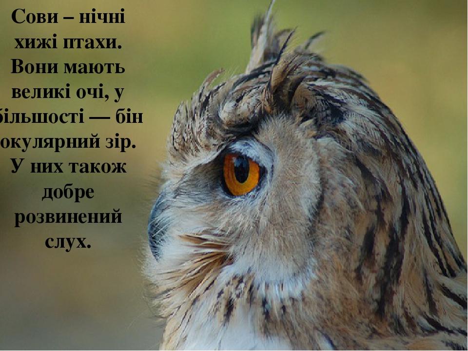 Сови – нічні хижі птахи. Вони мають великі очі, у більшості—бінокулярний зір. У них також добре розвинений слух.